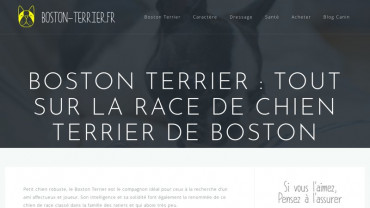 Page d'accueil du site : Boston Terrier