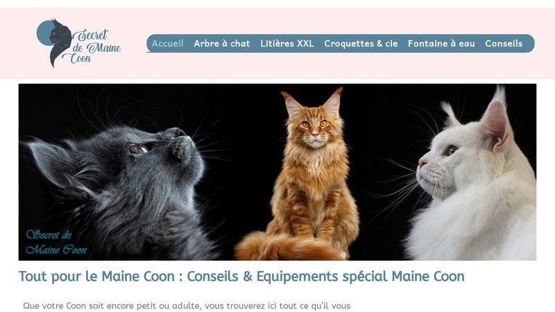 Secret de Maine Coon