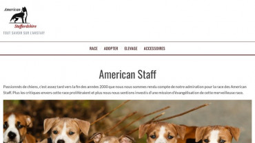 Page d'accueil du site : American Staffordshire